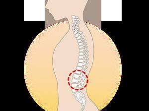 背骨横からの強調イラスト